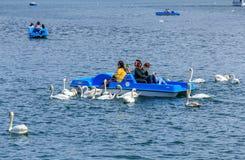 Łabędź na Jeziornej lucernie w Szwajcaria Fotografia Stock