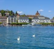 Łabędź na Jeziornej lucernie w Szwajcaria Zdjęcia Royalty Free