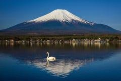Łabędź na Yamanaka jeziorze z Mt fuji Fotografia Stock