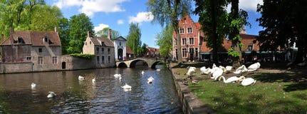 Łabędź przy Begijnhof i Minnewater parkiem w Bruges Fotografia Stock