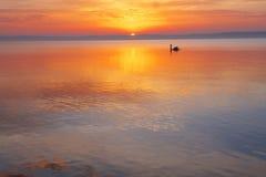 łabędziątko ranek Obraz Royalty Free