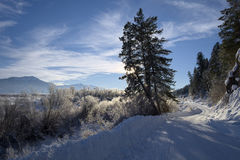 Łabędzi Dolinny Idaho Obrazy Royalty Free