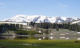 Łabędzi Jeziorny Yellowstone park narodowy Zdjęcia Stock