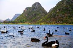 Łabędzi jezioro w Puzhihe Scenicznym terenie fotografia stock