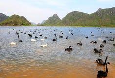 Łabędzi jezioro w Puzhihe Scenicznym terenie zdjęcia stock