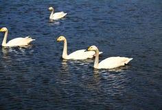 Łabędzi jezioro w Puzhihe Scenicznym terenie obrazy stock