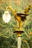 Łabędzia lampa Fotografia Royalty Free