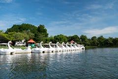 Łabędzia paddle łódź w jeziorze Obrazy Royalty Free