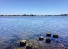 Łabędzia rzeka Zdjęcia Royalty Free