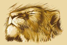 łaciński Leo lwicy imienia panthera dosypianie ilustracja wektor
