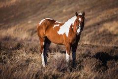 Łaciaci koni stojaki na skłonach Obraz Stock