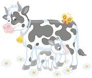 Łaciasta krowa karmi jej małej łydki Zdjęcie Royalty Free