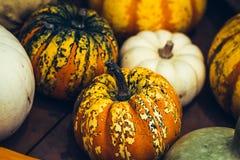 Łaciasty pomarańczowy dyniowy zakończenie, symbol Halloween zdjęcie stock