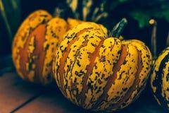 Łaciasty pomarańczowy dyniowy zakończenie, symbol jesień zdjęcie royalty free