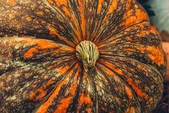 Łaciasty pomarańczowy dyniowy zakończenie, symbol jesień fotografia stock