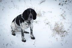 Łaciasty psi obsiadanie w śnieżnym ogarze Zdjęcie Stock