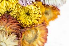 Ładna Żółta słoma kwitnie tło Zdjęcia Royalty Free