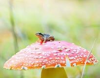 Ładna żaba Obrazy Stock