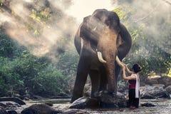 Ładna dziewczyna dotyka słonia ` s kość słoniową w tradycyjnych tajlandzkich kostiumach Obraz Royalty Free