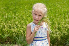 Ładna dziewczyna od spikelets w jego ręce na ryżu polu Zdjęcia Stock
