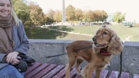 Ładna dziewczyna z Cocker spaniel na ławce outdoors zbiory