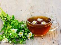 Ładna filiżanka herbata z rumiankiem kwitnie Zdjęcie Stock