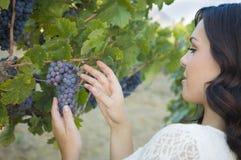 Ładna Młoda Dorosła brunetki kobieta Cieszy się win winogrona w winnicy Fotografia Royalty Free