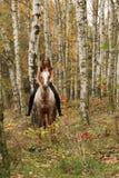 Ładna młoda dziewczyna jedzie konia bez jakaś wyposażenia w jesieni Obraz Royalty Free
