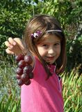 Ładna mała dziewczynka w winnicy w jesieni z winogronami Obraz Royalty Free