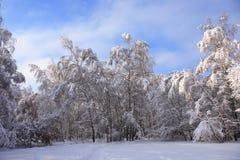 ładna tło zima Zdjęcia Stock