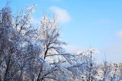 ładna tło zima Zdjęcie Royalty Free