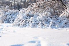 ładna tło zima Fotografia Royalty Free