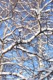 ładna tło zima Obraz Stock