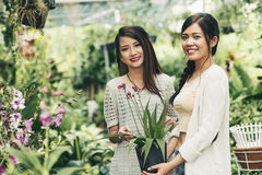 Ładne kwiaciarnie zdjęcie royalty free