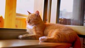 Ładnego chłodu czerwony kot kłama na balkonowym lezley blisko, relaksuje klimaty, iść, i spać i grzać, okno, sunshines zbiory
