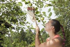 Ładnej kobiety zgromadzenia zieleni organicznie jabłka z zrywaniem wtykają fotografia royalty free