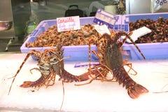 Ładni dekorujący świezi homary w lodzie Obraz Royalty Free