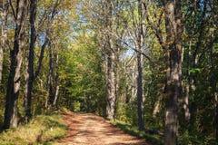 Ładni drzewa i droga w jesień lesie Zdjęcie Royalty Free