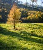 Ładni drzewa w jesień lesie Zdjęcie Stock
