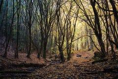 Ładni drzewa w jesień lesie Obraz Stock