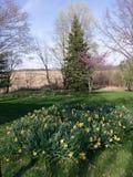 Ładni kolorów żółtych kwiaty i purpurowy drzewo Obrazy Royalty Free