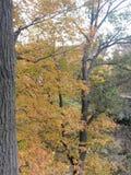 Ładni kolorów żółtych liście Obrazy Royalty Free
