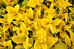 Ładni kolorów żółtych liście Zdjęcie Royalty Free