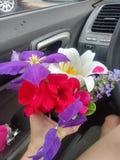 Ładni kwiaty podnoszący na letniego dnia spacerze obraz royalty free