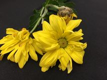 Ładni kwiaty zaczyna więdnąć obraz stock