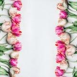 Ładni pastelowego koloru tulipany z wodą opuszczają, kwiecista rama, odgórny widok wiosna kwiat Fotografia Stock