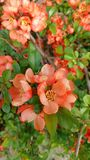 Ładni pomarańcze kwiaty zdjęcia stock