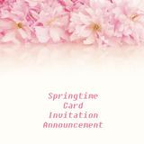 Ładni Różowi wiosny Czereśniowego okwitnięcia grona przez wierzchołek z pustym tło pokojem lub above lub przestrzeń below dla kopi Obrazy Royalty Free
