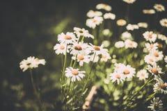 Ładni wildflowers robić z miękkim rocznikiem filtrują Zdjęcia Royalty Free