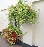 Ładni wiszący koszykowi kwiaty Zdjęcie Stock